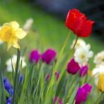 Rauhallista pääsiäistä!